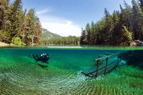 Submerged-tree2.jpg